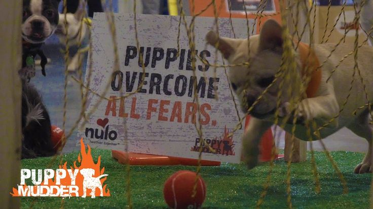 Tough Mudder just announced their newest ruffest event...and it's f adorable! https://www.youtube.com/watch?v=1eHVevEYnQA