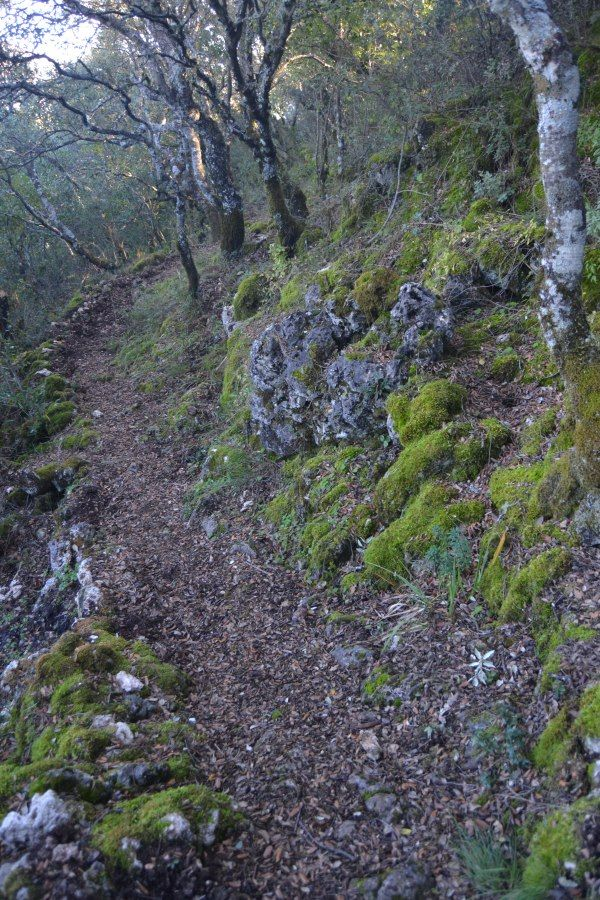 Camino por el bosque del Sendero botánico dehesa Vargas, Parque Natural de las Sierras Subbéticas en Córdoba