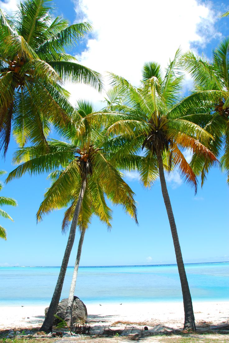1000 Images About Palm Trees On Pinterest Queen Palm