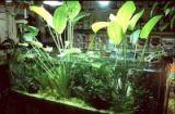 Forum di Acquariofilia acquari marini e acqua dolce, consigli allevamento pesci tropicali e allestimento acquario dolce e marino, articoli di acquariofilia