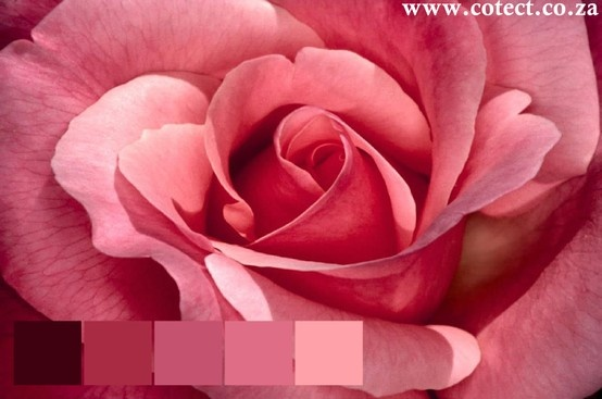 Winter is upon us why not get your #colour inspiration from the beautiful Rose