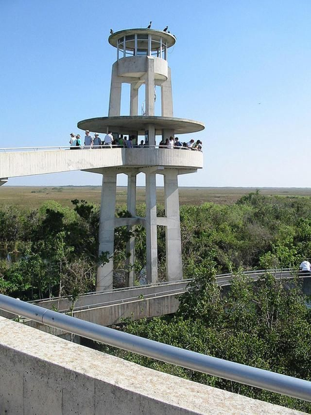 Top 10 Activities to Enjoy During Your Visit to Everglades National Park: Shark Valley Observation Tower