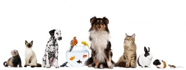 #Animali primo soccorso e numeri utili in #Lunigiana