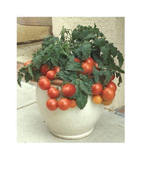 Apartmandan Kurtulamayanlar için, Balkonda Sebze Bahçesi…