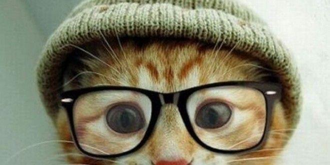 Kedilerde Göz Sağlığı ve Tedaviler | Kedi Maması, Köpek Maması, Fiyatları, Köpek, Kedi, Akvaryum, Kuş Haberleri