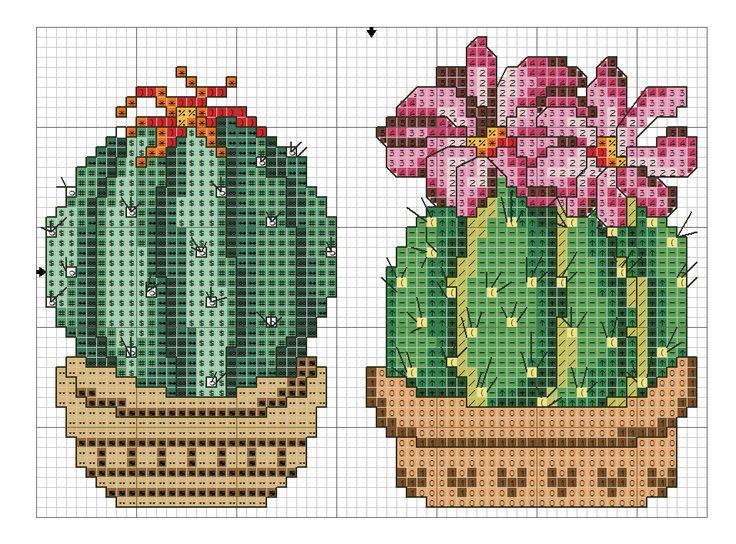 kaktusy ee 3