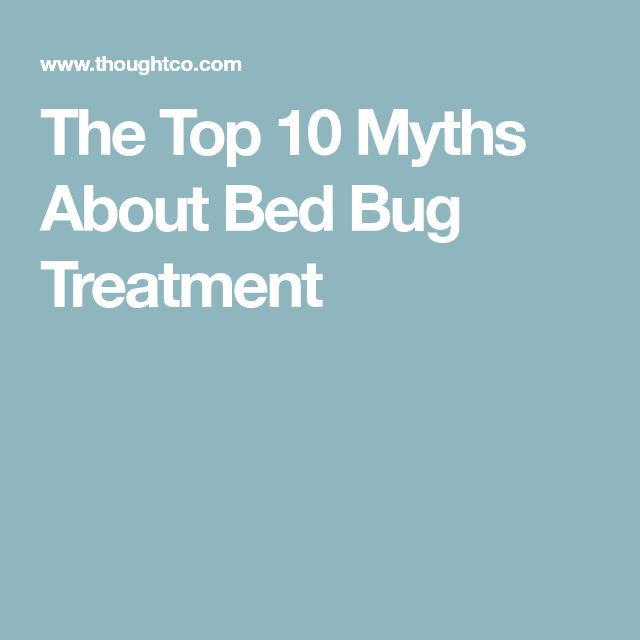 The Top 10 Myths About Bed Bug Treatment