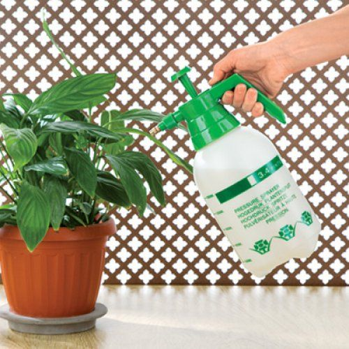 Почему сохнут кончики листьев комнатных растений?