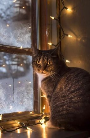 Snow and cat