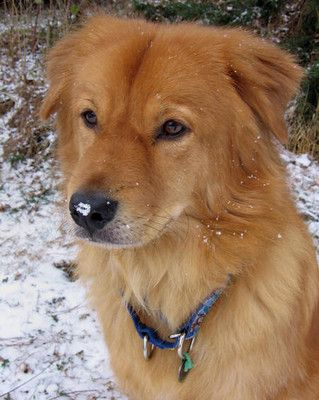 17 Best images about golden chow on Pinterest | Boats ...
