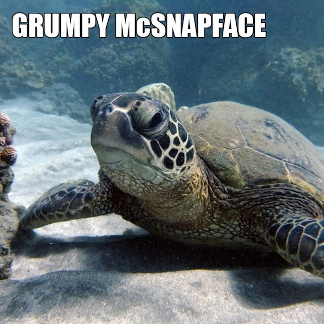Best Fun Ocean Memes Images On Pinterest Beautiful Nature - 18 hilarious brand new animal names that are so much better than the originals