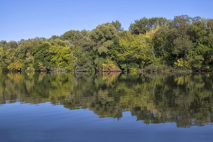 Reflections on the River Tisza