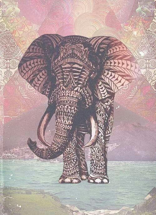 elefante indiano tumblr - Pesquisa Google                                                                                                                                                     More