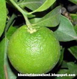 Jeruk keprok (Tangerine Citrus nobilis Lous) Adalah jeruk yang mempunyai bentuk buah yang bulat dengan kulit berwarna hijau. Jeruk keprot mempunyai ciri khas tersendiri jika kita bandingkan dengan jeruk-jeruk yang lainnya