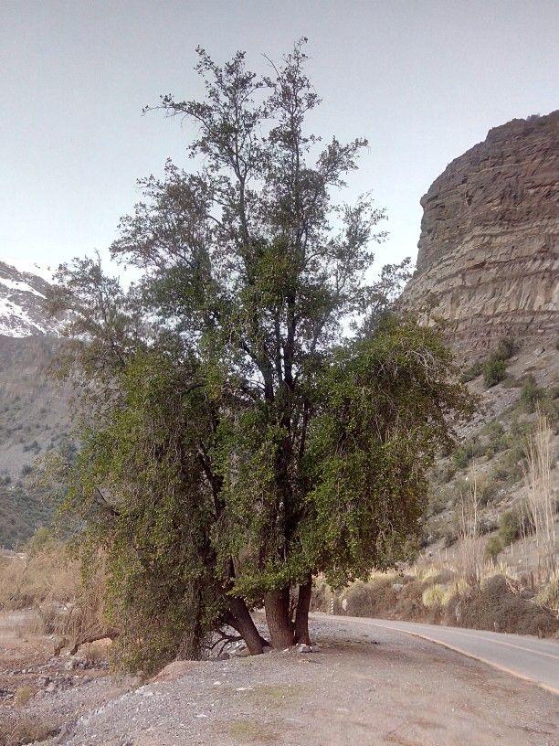 Cajon del Maipo. Chile.