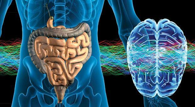 L' intestino è il nostro secondo cervello, infatti priduce la serotonina e il 70% del sistema immunitario.... È la nostra parte piu sensibile e molte volte ci troviamo in disbiosi che puo dare problemi in qualsiasi modo anche pur non avendo male proprio all intestino, e quindi bisognerebbe prendercene cura e riequilibrare la flora batterica per stare in benessere
