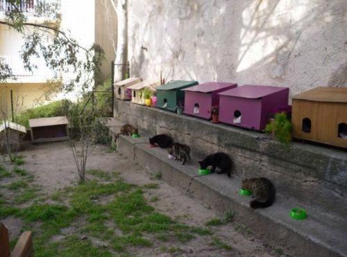coup de coeur abris pour chats errants cabanes de. Black Bedroom Furniture Sets. Home Design Ideas