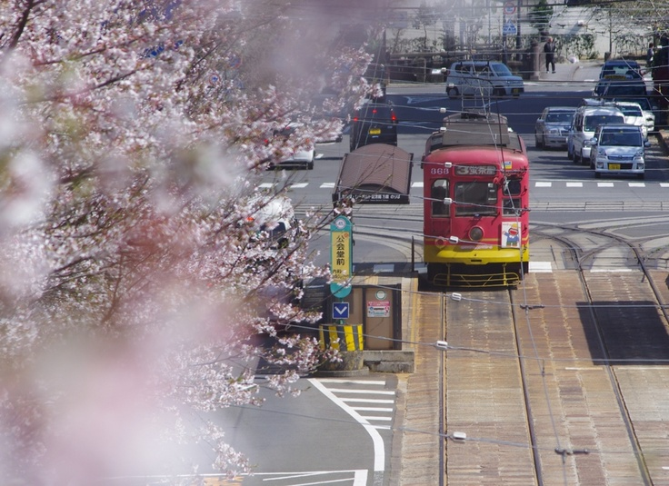 Cherry blossom at Nagasaki city