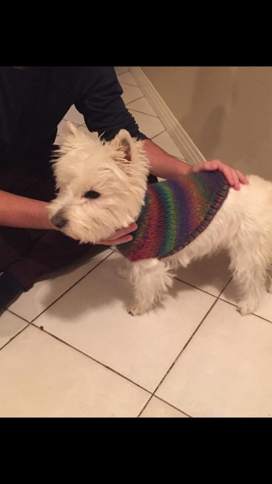 Abbey in her fall sweater