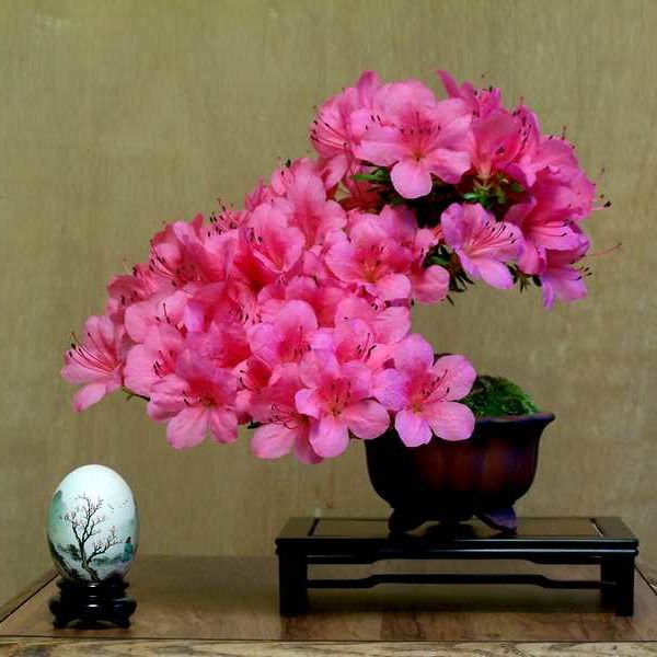 Bonsai Azalea displayed on short stand, complimenting tree- aided by handpainted egg