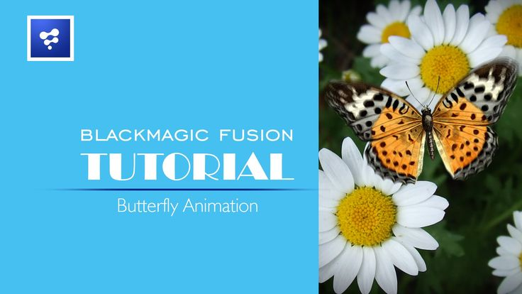 Blackmagic Fusion Tutorials_Butterfly Animation
