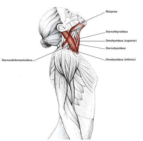 Común Cuello y Hombro Ejercicios de estiramiento | FrozenShoulder.com