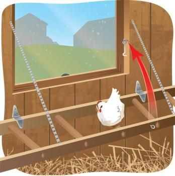 What a great use for an old ladder ... turn it into a roost for chickens! | New use for bales, ladders | Living the Country Life | http://www.livingthecountrylife.com/buildings-fences/outdoor-ideas/new-use-bales-ladders/