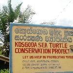 Turtle Hatchery in Kosgoda in between Colombo and Galle.