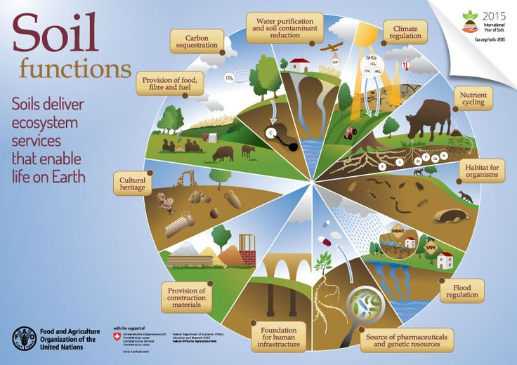 Soils enable life on Earth. They give us food & fuel, they purify water & much more.