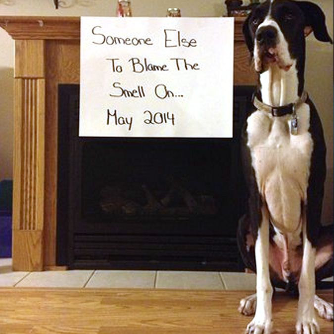 10 Baby Announcements with Dogs That Will Make You Squee