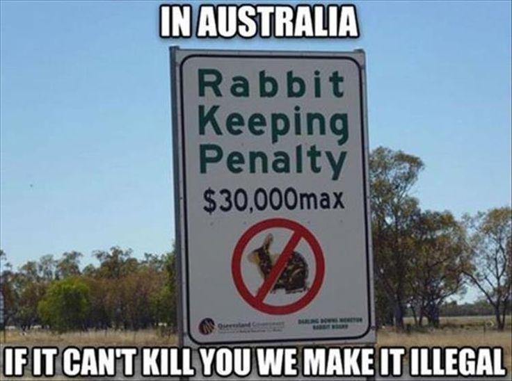 539 best Rabbit rabbit rabbit images on Pinterest Bunnies, Bunny - resume rabbit cost