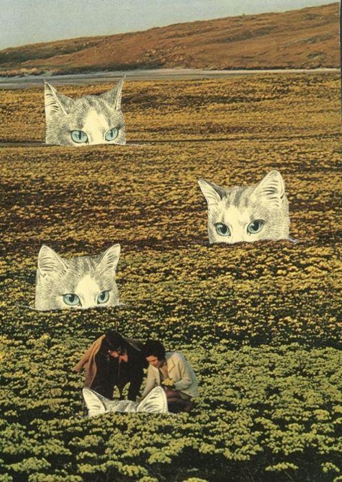 : Cat Art, Cats Meow, Art Collages, Cats Bella, Art Cats, Cat Fields, Collage Cats, Cat Collages, Unearthing Cats
