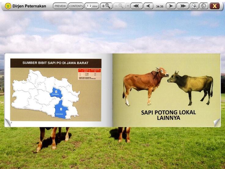 Peta Sapi Potong Booklet (inside page) I Inspirasi Media