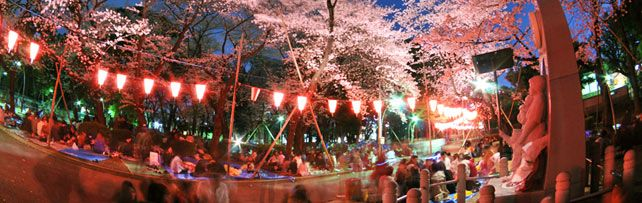 Cherry Blossom Viewing - Official Tourism Guide for Japan Travel