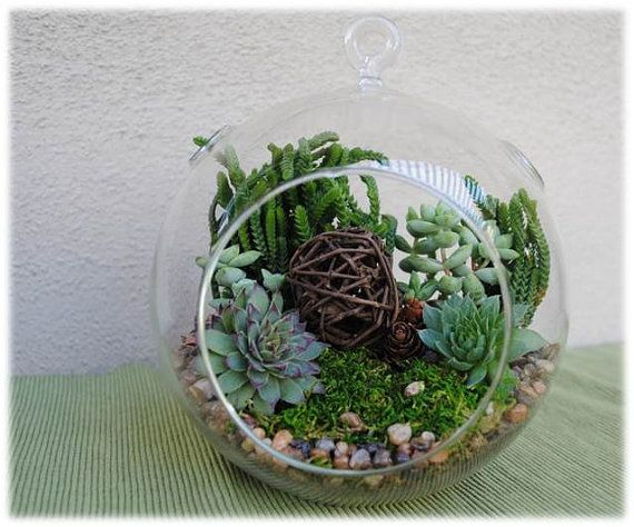 This complete and easy to assemble succulent terrarium kit comes with care and assembly instructions and contains the following for 1 kit: ♥