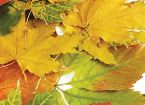 Print  Autumn: 