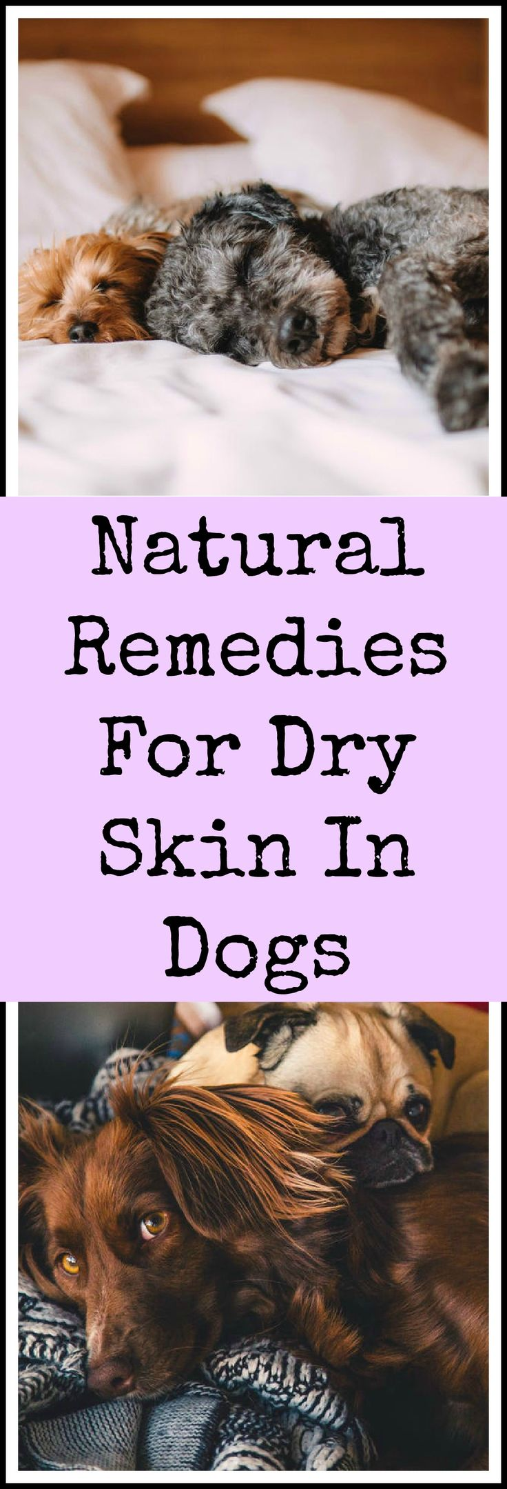 Natural remedies for dogs with dry skin.
