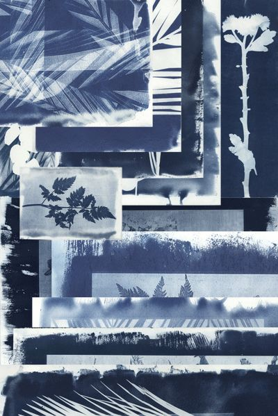 natalie Ratcliffe - Cyanotype - Blue