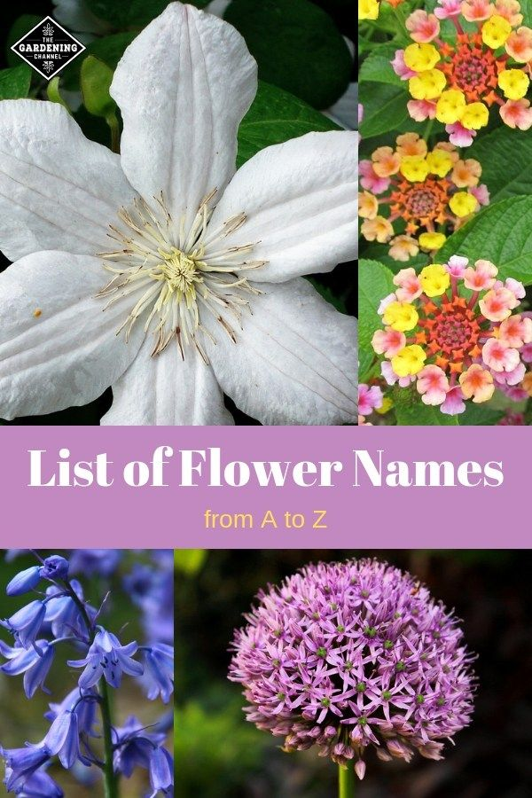 List Of Flower Names From A To Z Flowers Name List Flower