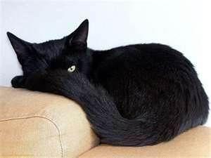 Black kitten is watching you.