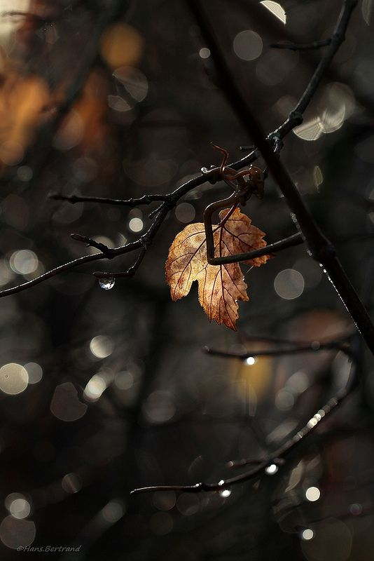 Leaf by Bertrand Hans