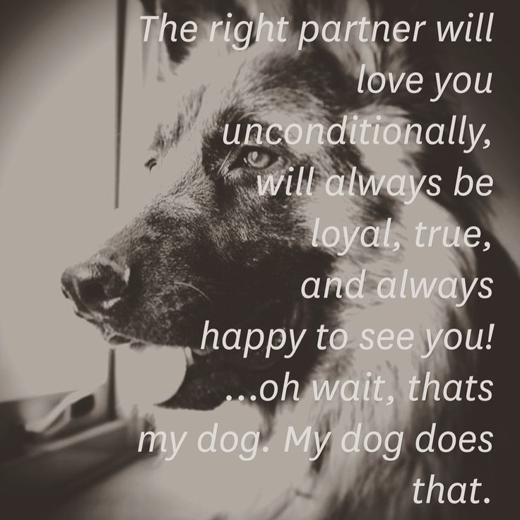 There is nothing more loyal than a dog, give them the support they deserve.