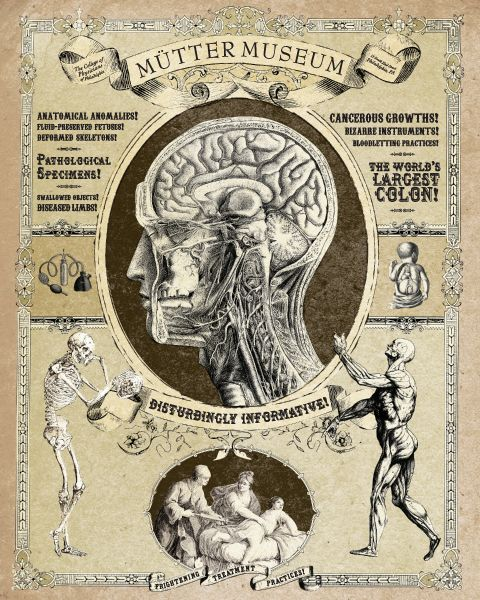 Mutter Museum of Medical Oddities. Philadelphia. Another place I'd like to visit.