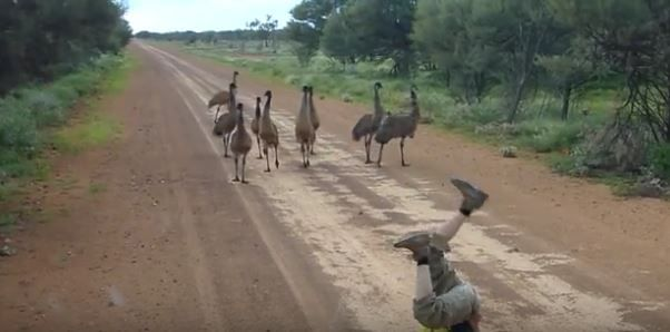 Man jogs upside down to attract emus