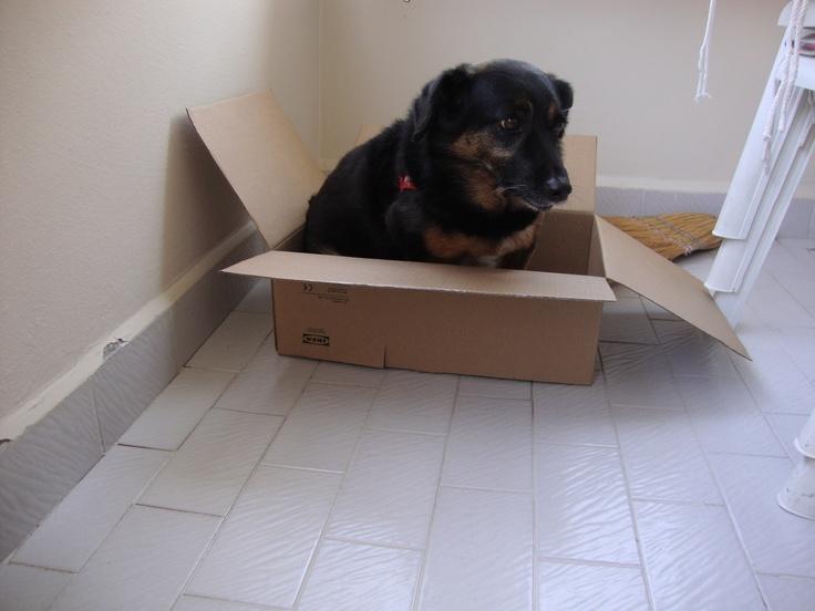 Cancan kutusuna girmiş, 25 TL'lik hediye çekini alıp alamayacağını heyecanla bekliyor! Siz de en yakın dostunuzun bir kutu içinde çekilmiş fotoğrafını mailto: sosyalmedya@altincicadde.com'a gönderin, 25 TL değerinde hediye çekinin sahibi olma şansını yakalayın!