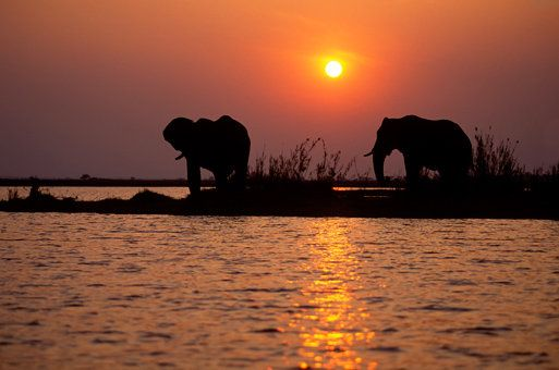 In Botswana the elephants love the sunsets just as much as we do. See more beautiful sunsets at www.greatestsunsets.com.