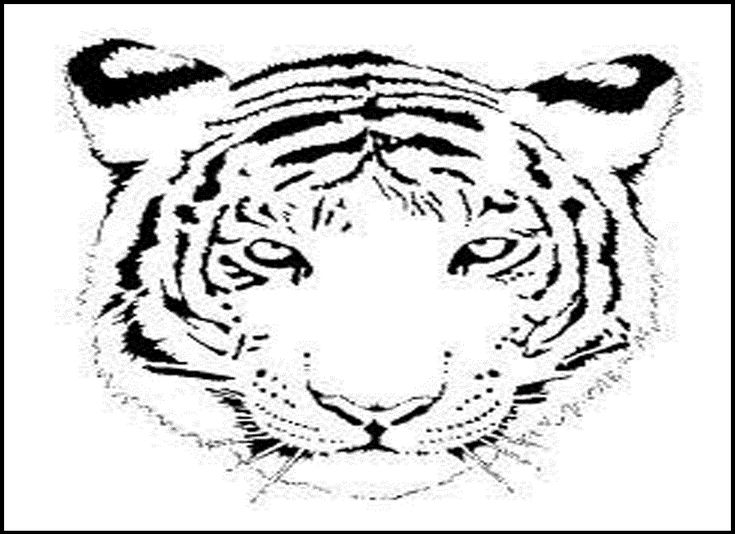 tiger face coloring page - 40 best designs for tees images on pinterest coloring