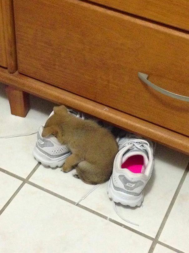 Фото: Забавные собачки, которые заснули в неожиданных местах и позах
