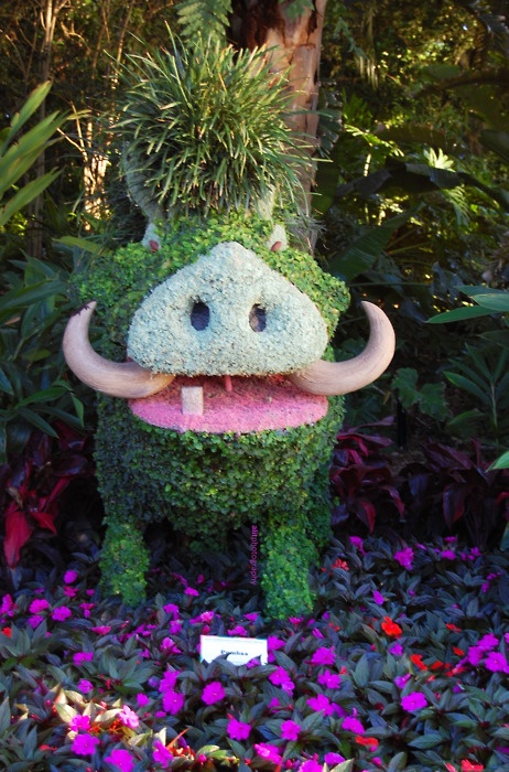 Plant Ideas for topiary