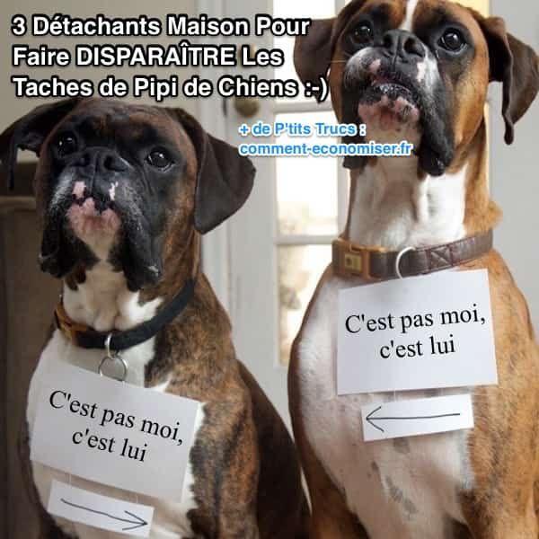Qu'il s'agisse de boue, de sang, de vomi, de la petite commission ou de la grosse commission, voici 3 recettes maison de détachants naturels pour éliminer et désodoriser les petites surprises de vos animaux.  Découvrez l'astuce ici : http://www.comment-economiser.fr/3-detachants-maison-pour-enlever-taches-urines-chiens.html?utm_content=buffer79b59&utm_medium=social&utm_source=pinterest.com&utm_campaign=buffer